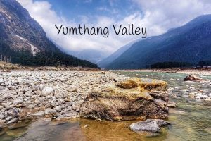 Best attraction for North sikkim is Yumthang Valley