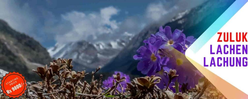 Enjoy the valley of Rhododendron in North Sikkim Silk Route